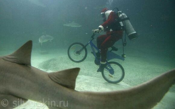 santa-biking-w-sharks
